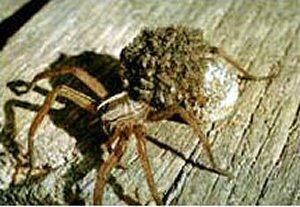 Services - Advanced Pest Services - Ashville, Alabama